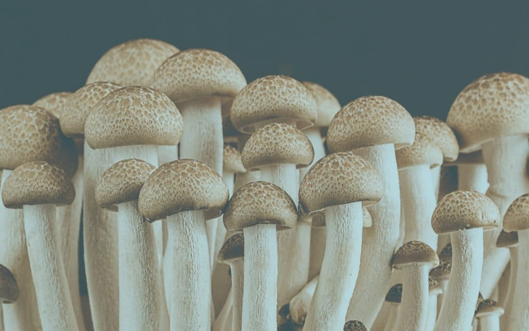 Allay Launches New Psilocybin Division